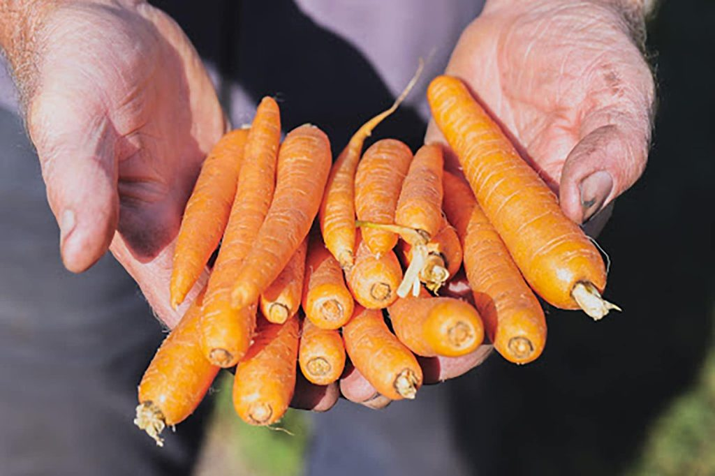 SPUD interview (sustainable carrots)