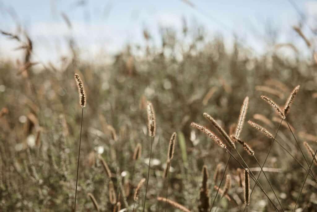 JASMINE Woven Hobo field